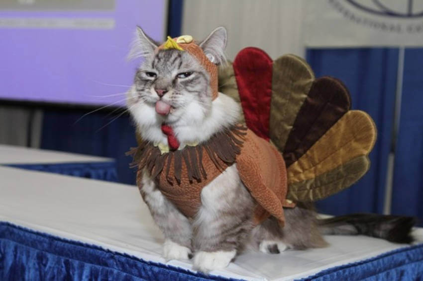 Kitty is all dressed up for Thanksgiving this year!