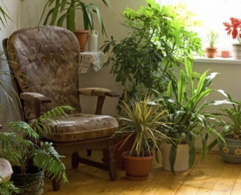 Fill your home with houseplants to increase your life expectancy!