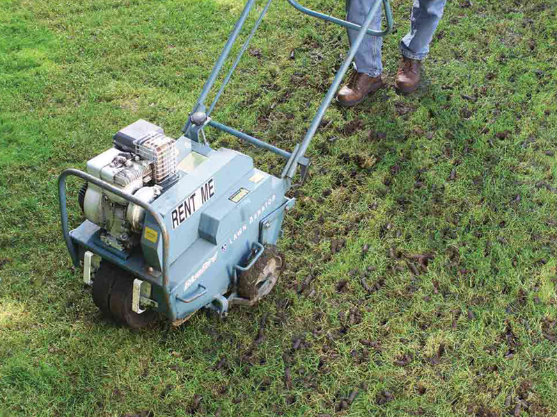 Do You Really Need to Aerate Your Lawn?