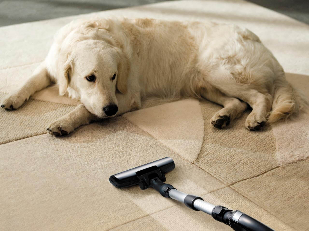 This dog looks at the vacuum like it's more of a bother