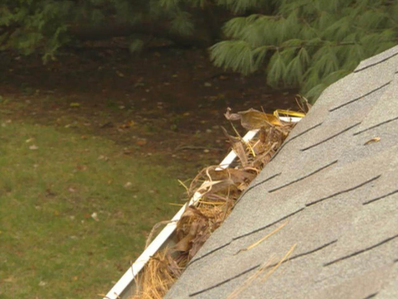 Gutters are sometimes overlooked when it comes to roof health