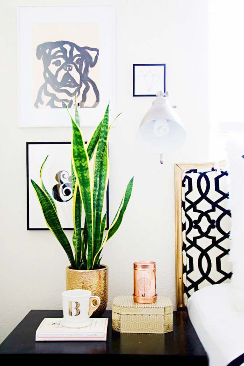 The snake plant gives a very modern, minimalistic look to the room!