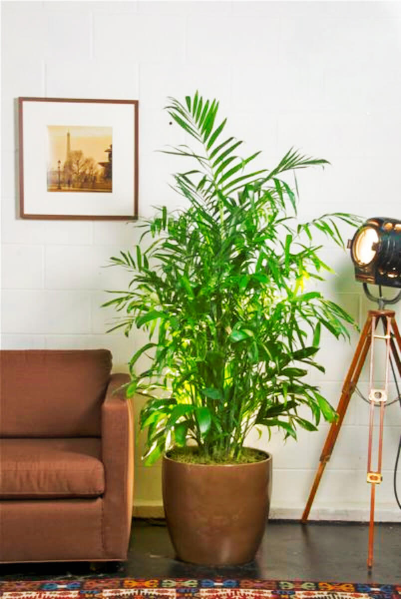 These Indoor Plants Will Help You Sleep Better - homeyou