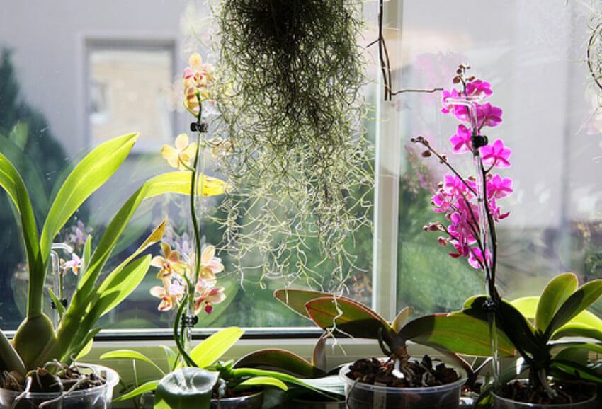 Get all your houseplants together to make the job easier.