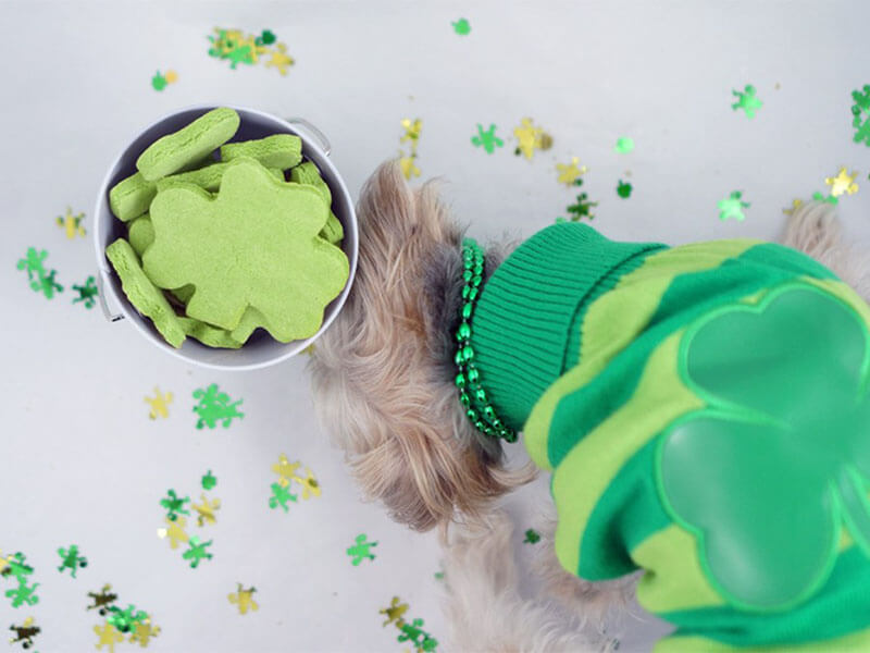 7 Homemade Treats to Surprise Your Pup on St. Patrick's Day