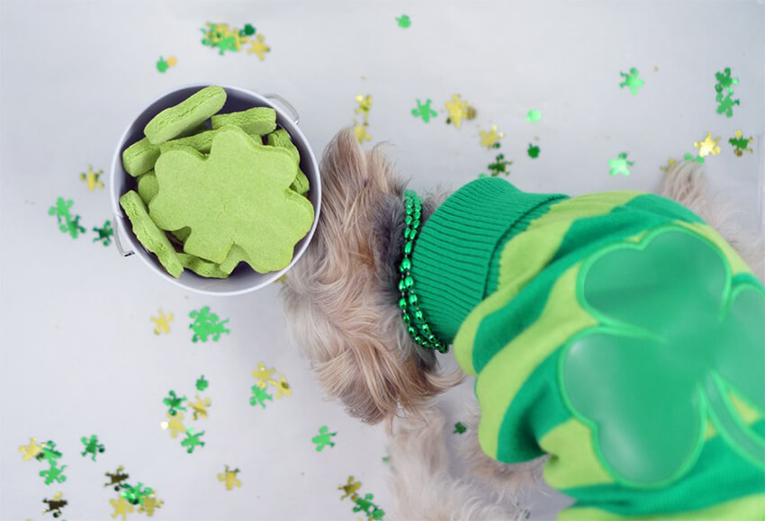 These treats will leave your pet with fresh breath!