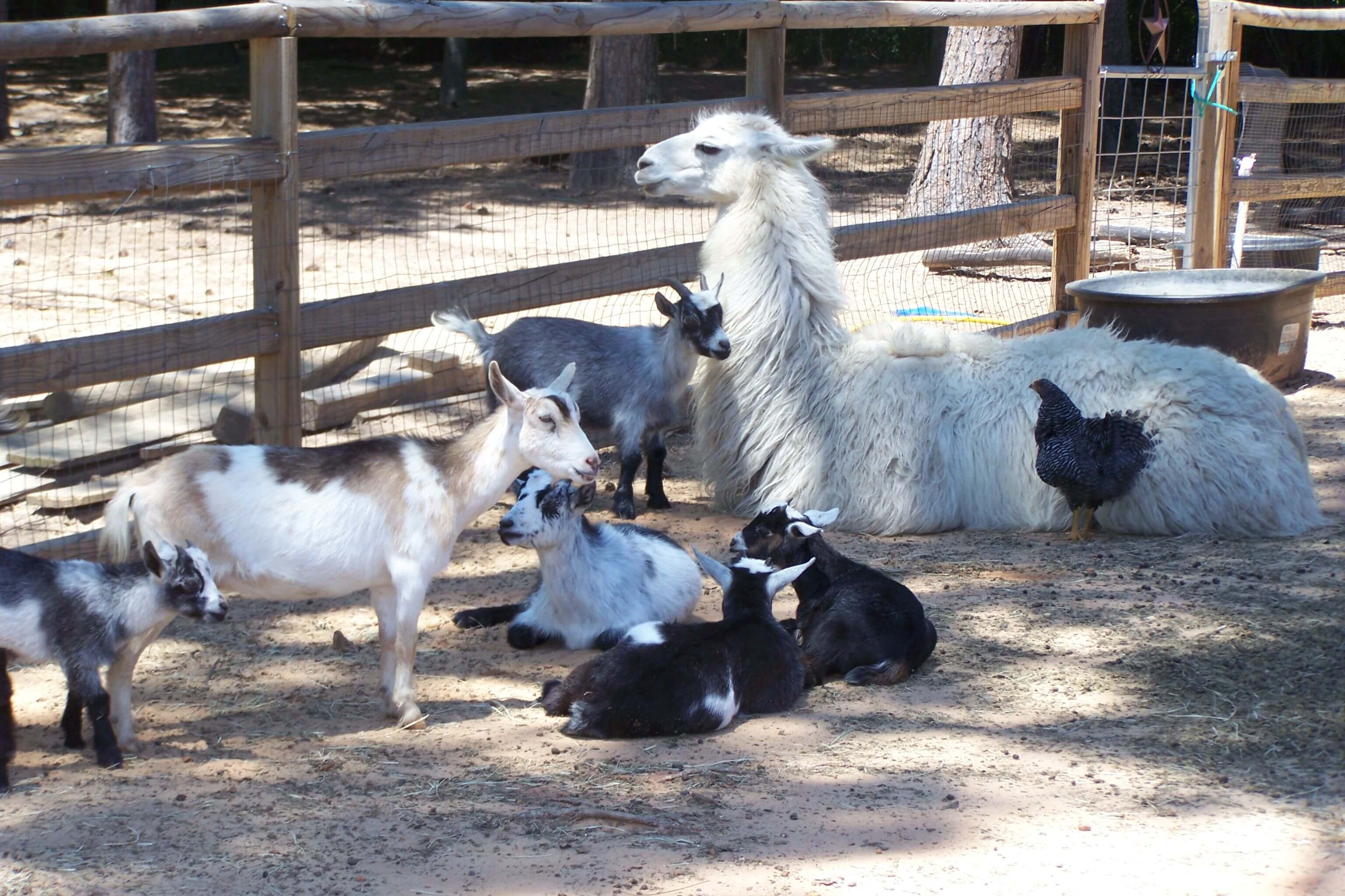 A petting zoo is a fun afternoon with the kids