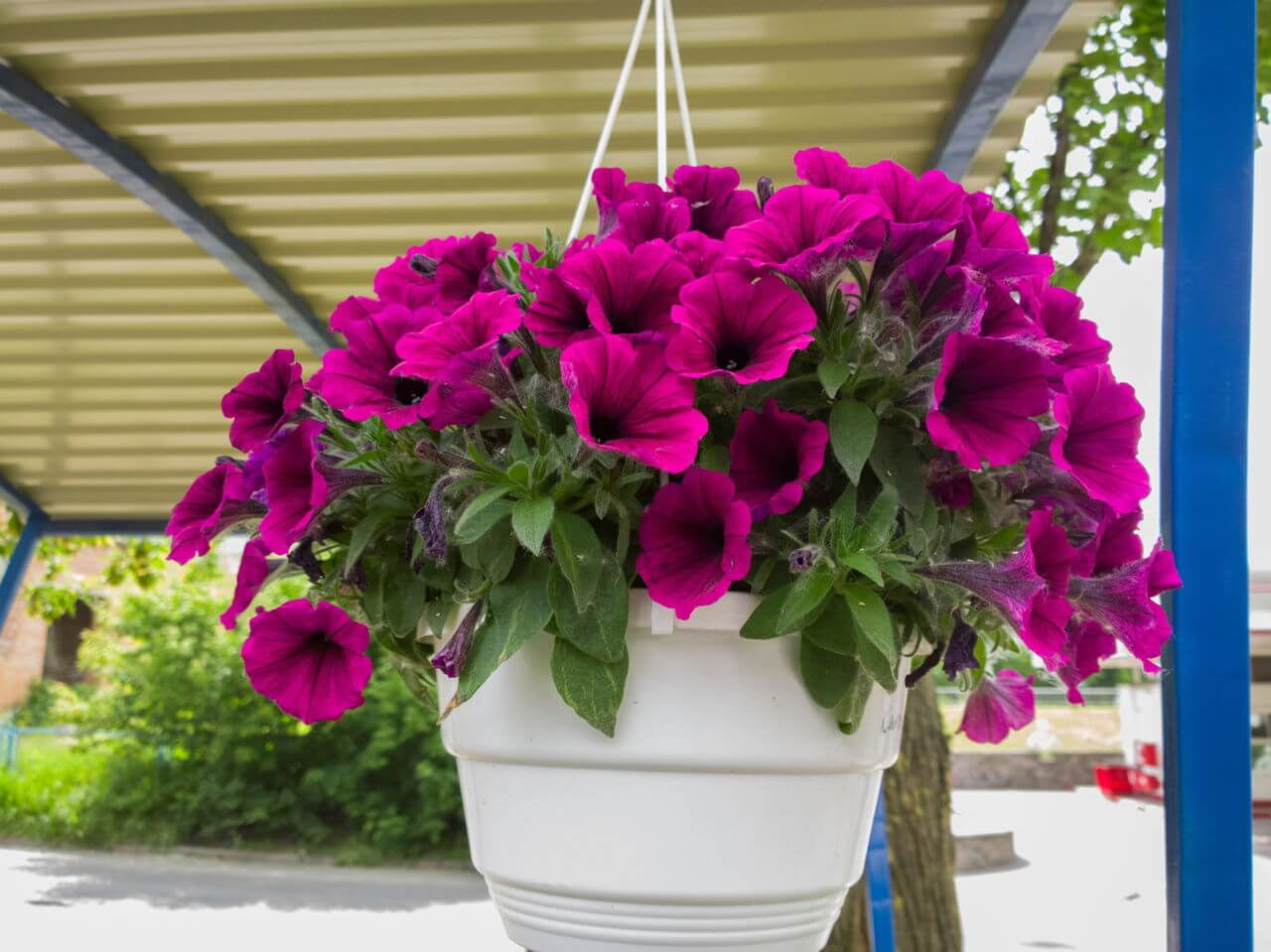 Pretty in purple: set these around the patio for some color