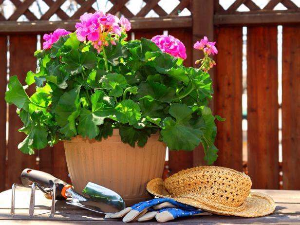 What a lovely geranium pot