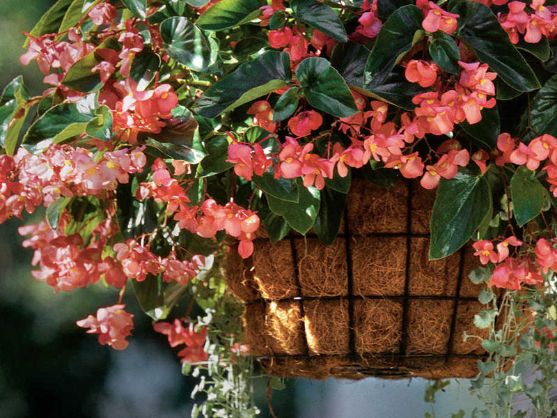 Plant These 6 Flowers for a Beautiful Porch or Deck
