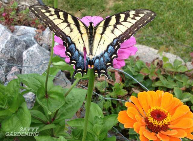 Some flowers will attract butterflies to your garden.