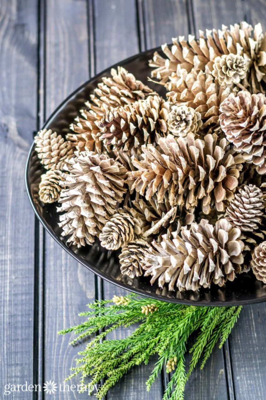 Pinecones are awesome!
