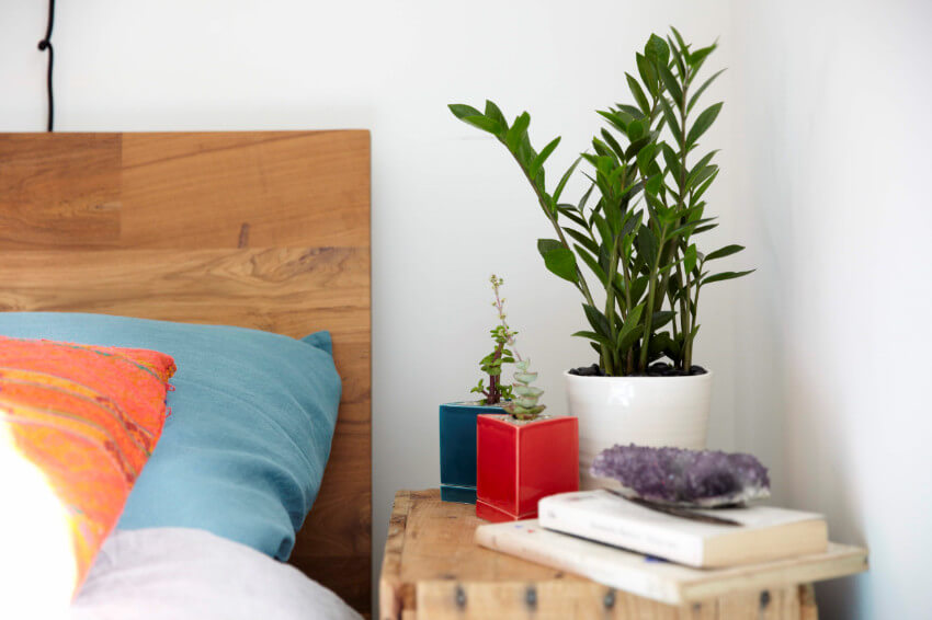 Indoor plants relieve anxiety, therefore help you sleep better too!