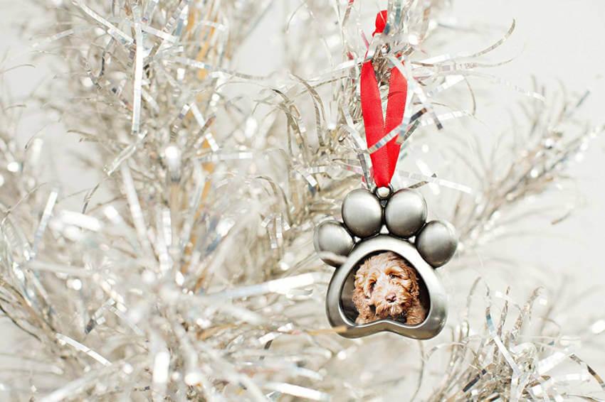 Pet photo ornament.