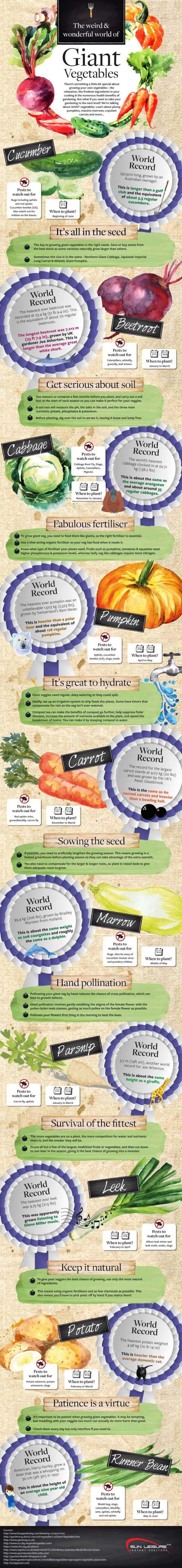 Fall DIY projects: This nifty infographic digs deep into the wacky world of giant vegetables and how to grow them.