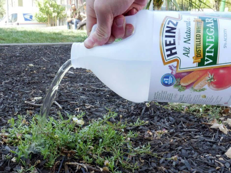 5 Ways to Use Vinegar in the Garden