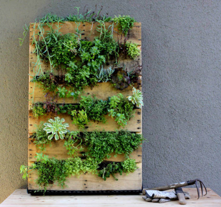 Build a vertical garden DIY from a wood pallet!