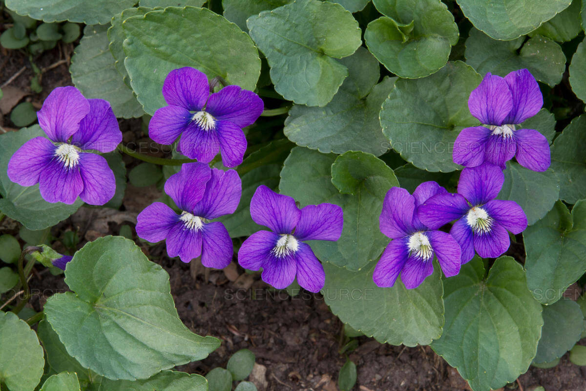 These purple beauties can really help make a difference