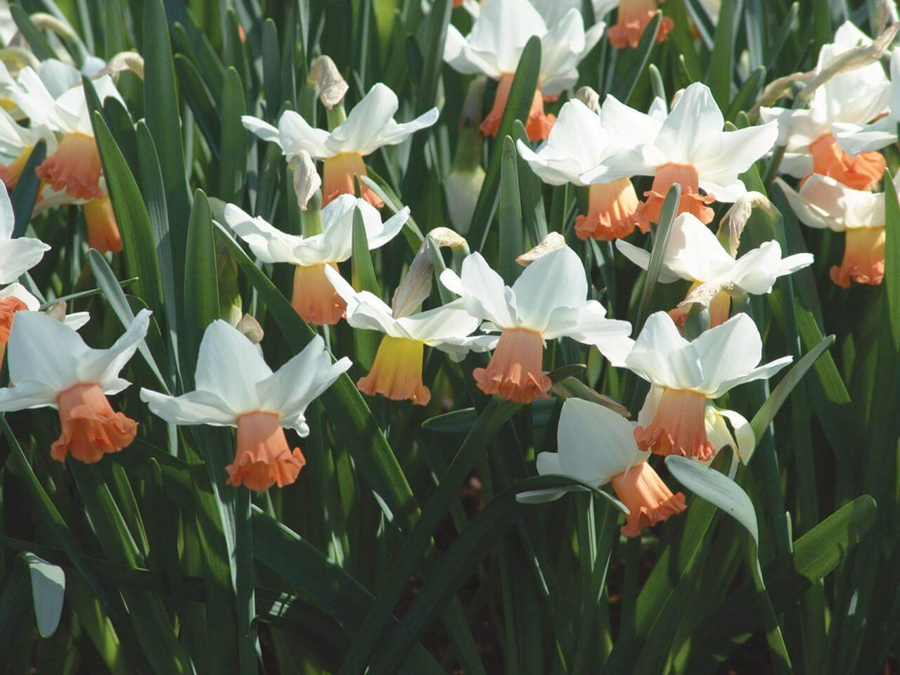 Bulbs to particularly well underground