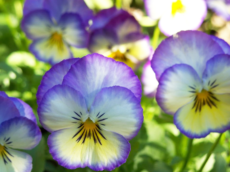Here's What to Plant in the Fall for Spring