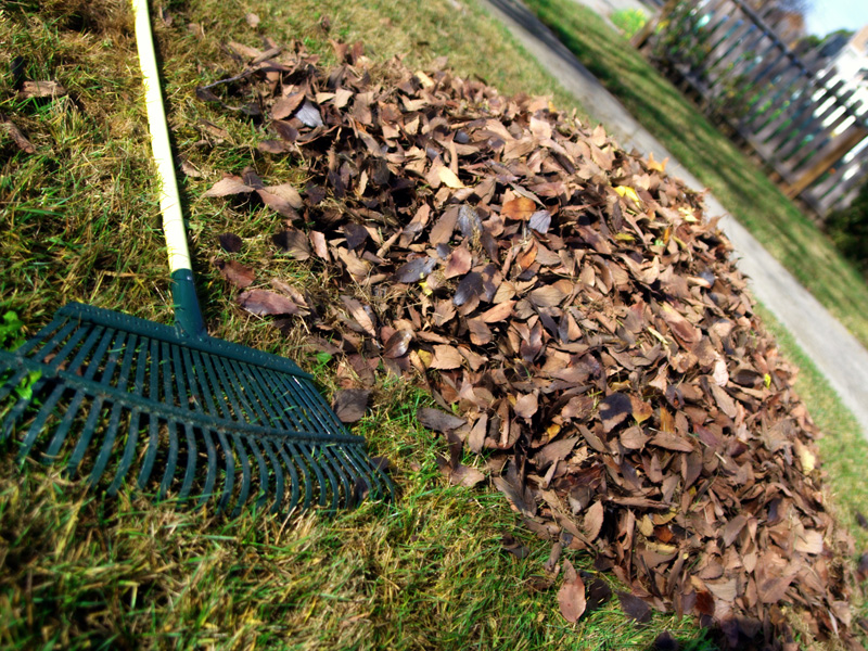 Raking leaves is just one of the professional's specialties