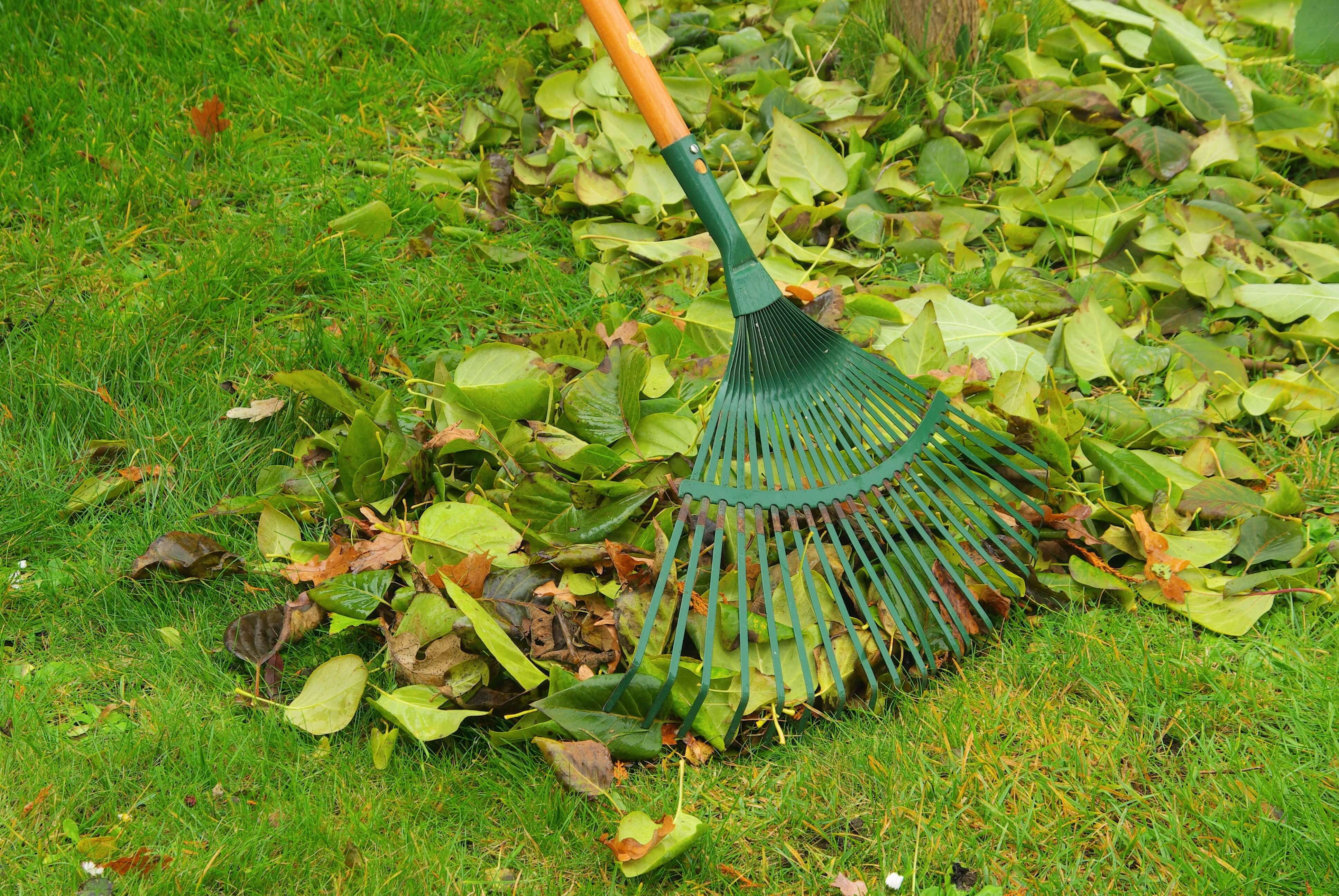 Back to the basics: lawn care 101